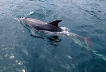 The dophins followed SE2
