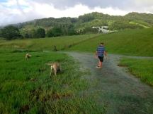 The rains made a creek on the farm