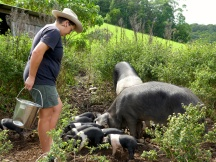 Avery feeding the pigs and piglets