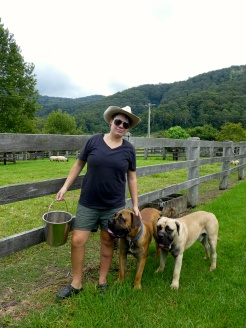 Feed time on the farm with Trooper and Sparrow the Boerboel Mastiffs