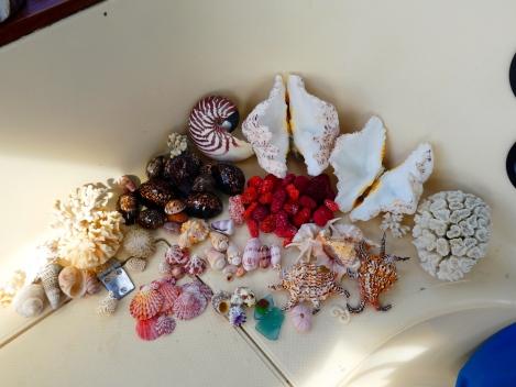 huon shells
