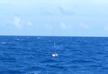 Fishing net buoy adrift and floating free