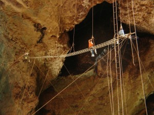 Harvesting-Cave-Swiftlet-nests-at-Gomantong-Caves-Source-Travel-Guide-Gomantong-Caves.html