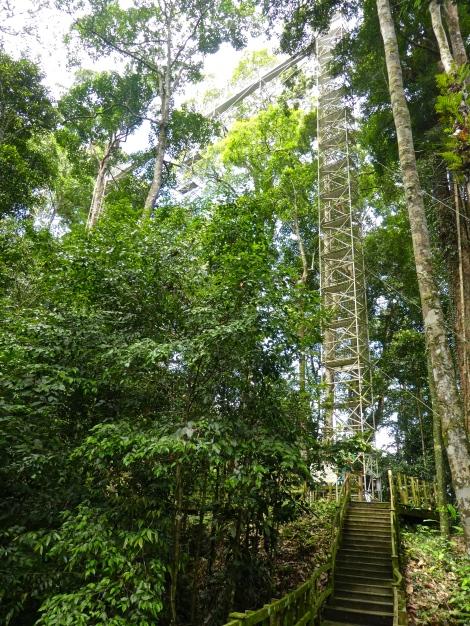 Temburong canopy climb