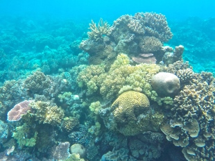 Beautiful soft and hard corals on the reef near Pendjalin Island