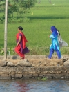Even walking along the narrow paths, the women's dress provides dramatic colour against the rice paddies