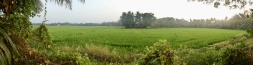 Vast areas of rice paddies