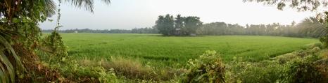 Vast areas of rice paddies